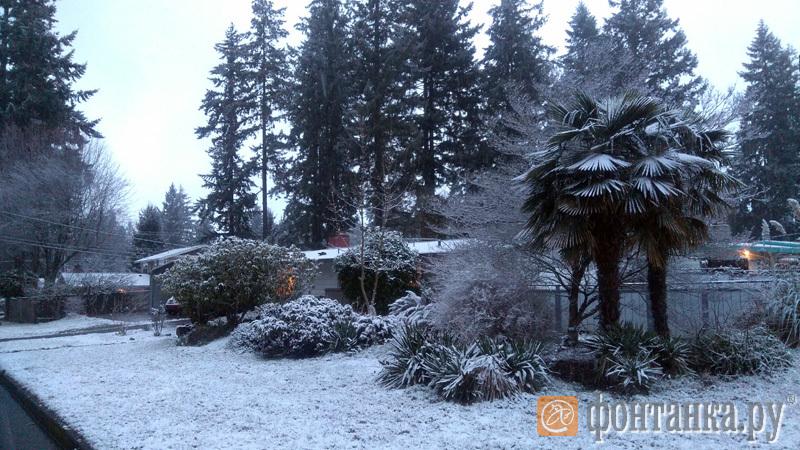 одна из пальм не выдержала снега и упала
