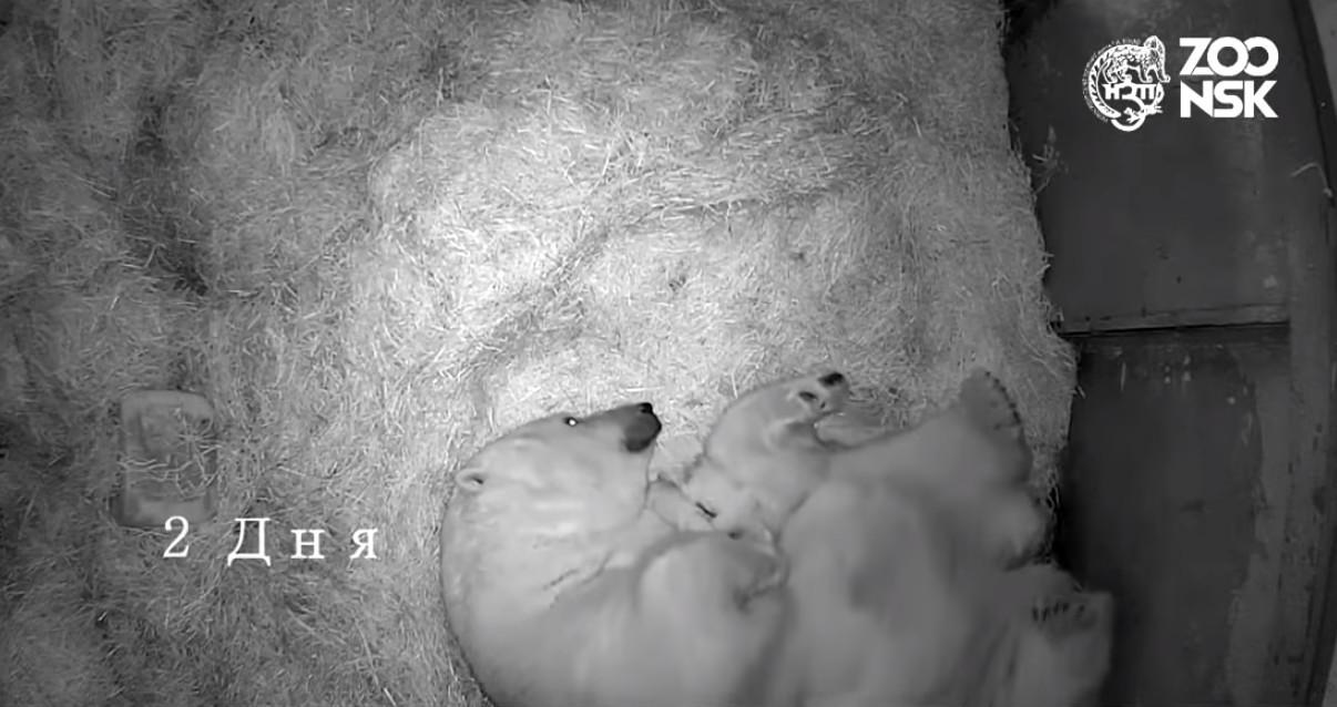Кадр из видео на YouTube-канале nsk zoo