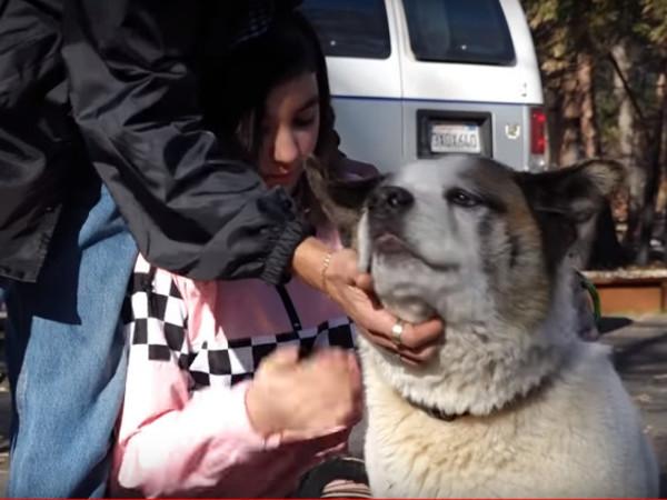 Пёс вернулся к хозяевам через 101 день после пожара, уничтожившего Парадайс. Как он выжил, подсказал запах