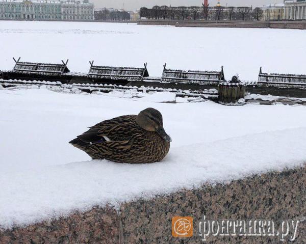Скользкое утро в Петербурге: одного занесло в столб, другого в светофор, третьего в соседа