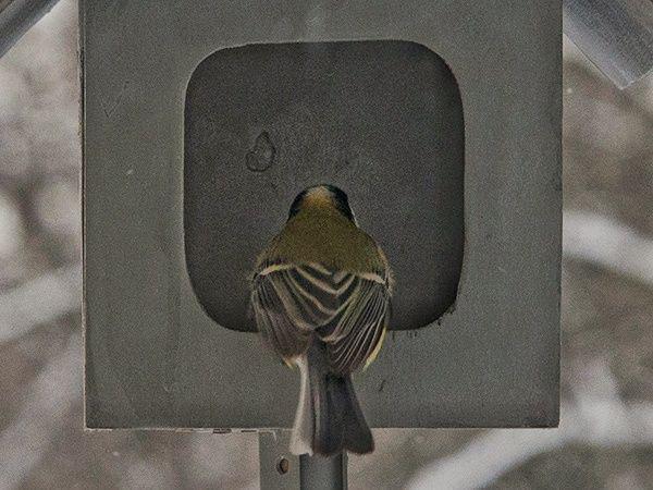 Это залёт, бердвотчер. Почему подсматривать за птицами полезно для всех