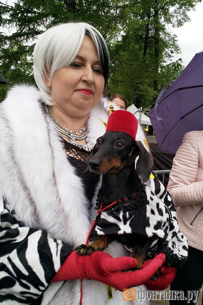 На Такс-параде наградили жертву злоумышленников и собаку-самолет (Иллюстрация 2 из 2) (Фото: Алина Циопа)