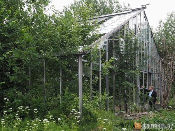 «Скажи 2024-й, чтобы все успокоились». Смольный показал проект реконструкции оранжерей Таврического сада