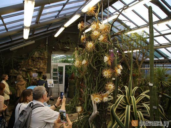 Причуда экзотического кактуса не дала спать сотням петербуржцев