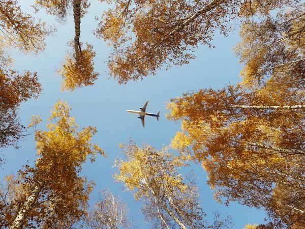 Продолжается традиционная распродажа Уральских авиалиний на бархатный сезон