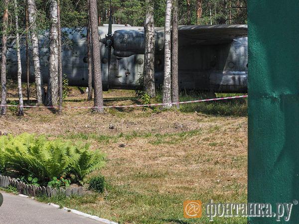 Тайна самолета из леса. Зачем среди сосен под Петербургом ржавеет советский транспортник