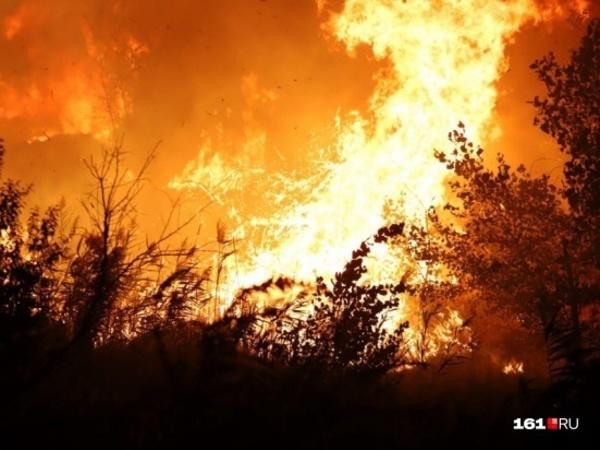 «Вдоль линии огня мелькнула крыса». Под Ростовом горит 1,5 тысячи «квадратов» камыша и травы