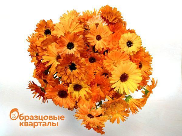 Цвет настроения – оранжевый