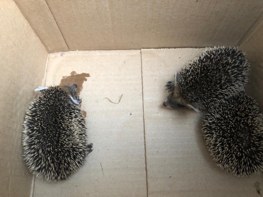 Фото: РКЦентр «ВЕЛЕС» — помощь диким животным