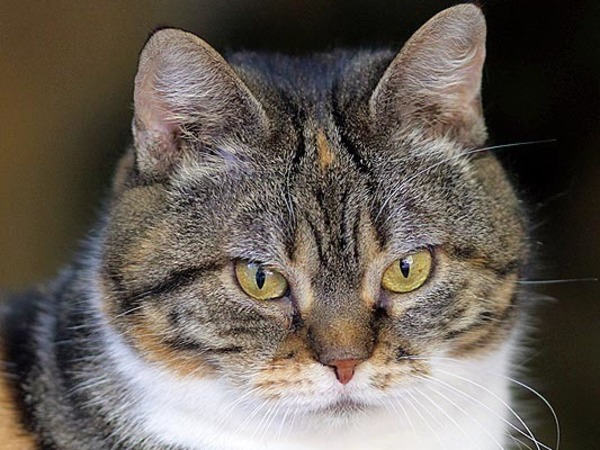 В Ленинградском зоопарке умерла кошка Дуся. Она объедала соседку-рысь 12 лет